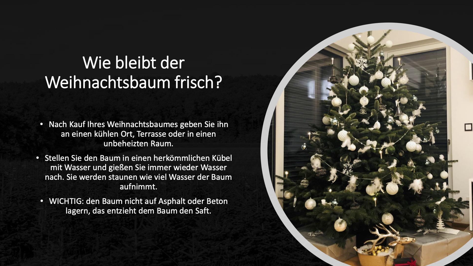 Wie bleibt Ihr Weihnachtsbaum frisch?